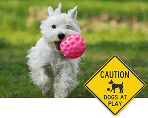 Dogs at Play Dog Poop Sign